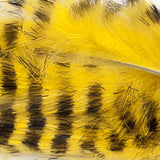 Rabbit Zonkers, Black Barred Magnum - Yellow (BMR383BL)