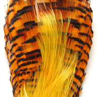 Golden Pheasant Neck