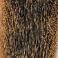 Squirrel Tail - Natural Fox