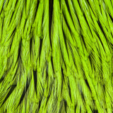Whiting American Rooster Cape - Badger Dyed Fl Green Chartreuse