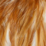 Whiting American Rooster Saddle - White Dyed Medium Ginger