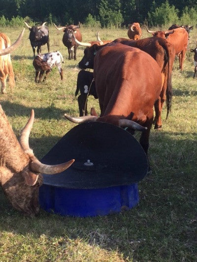 Fly & Mosquito Control in your Cattle