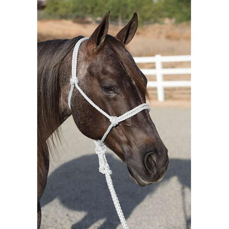 TKHHR--White Ranch Hand Halter w/Lead