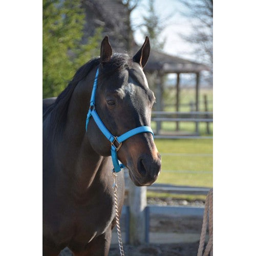 TK292851-Average-Blue Halter Signature Nylon 1""