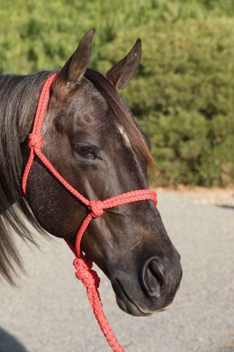 TKHHR--Red Ranch Hand Halter w/Lead