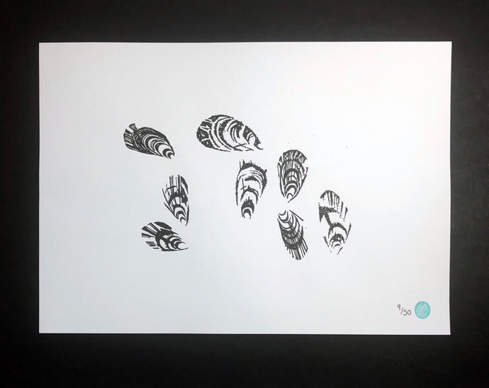 Unmounted Mussel Picture