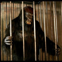 Gorilla in a Cage Animated Prop