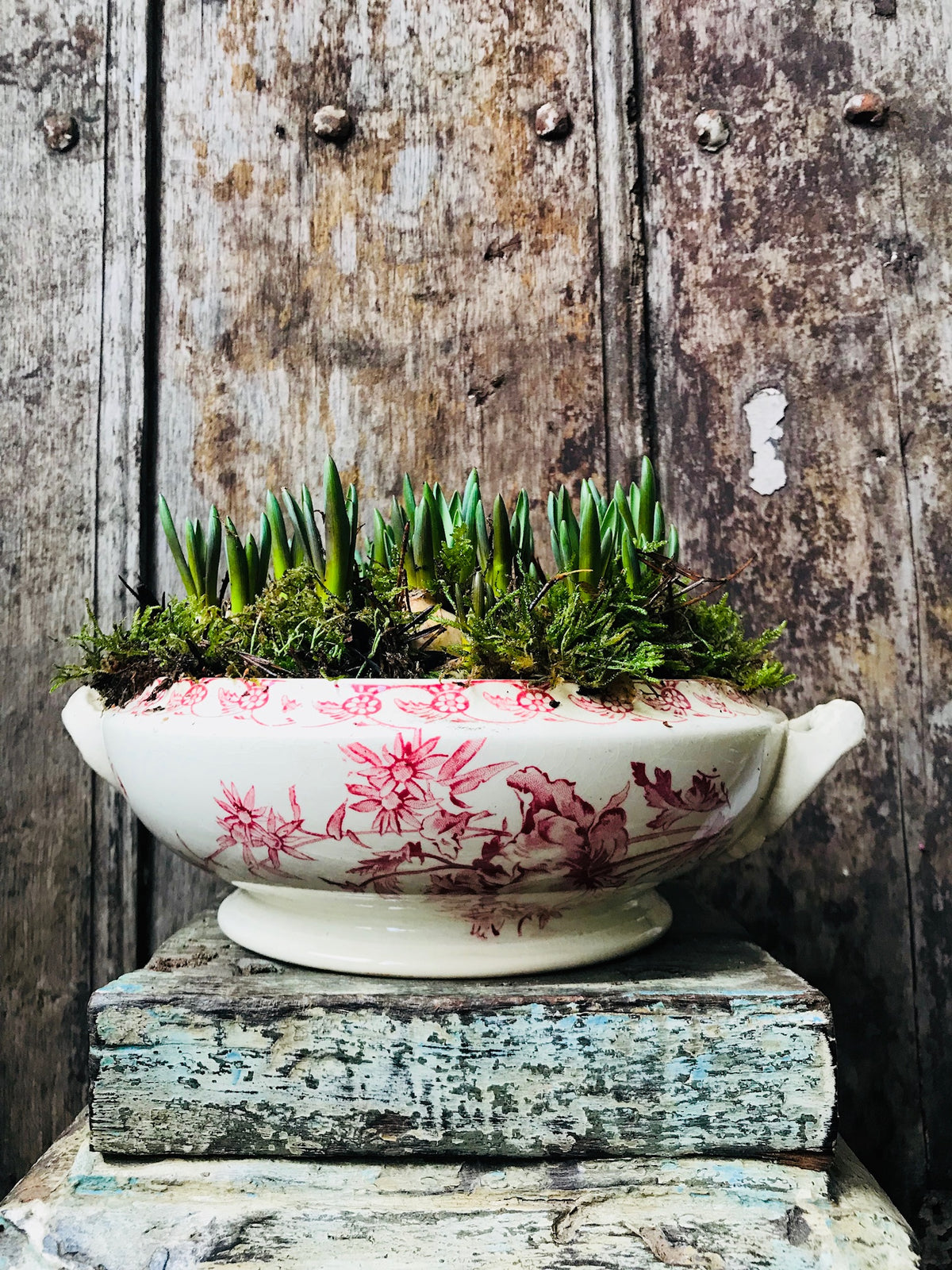 Vintage french Gien tureen planted with spring bulbs