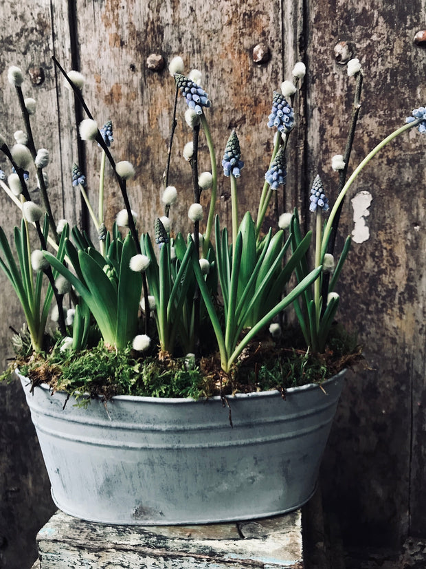 Zinc planter with bulbs