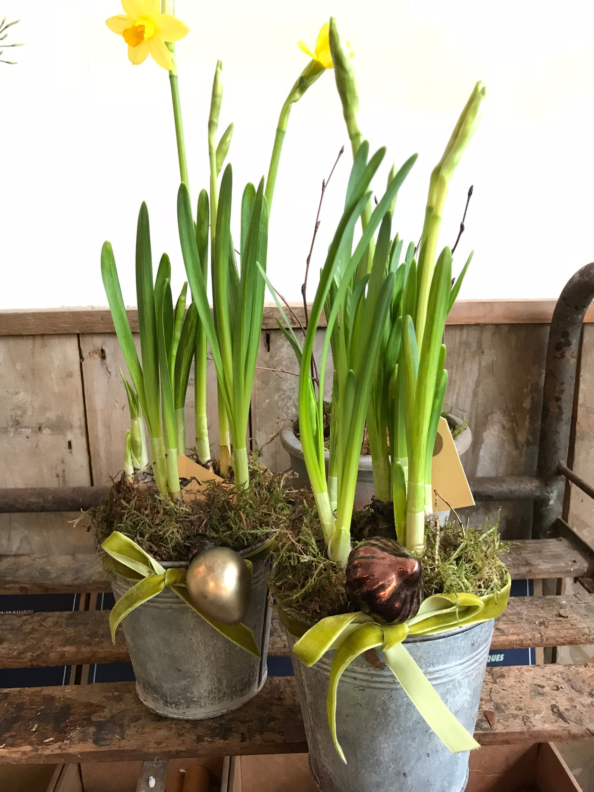 Range of potted plants and bulbs for last minute gifts! From £10