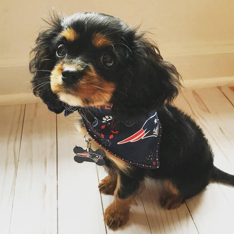 New England Patriots Dog Bandana