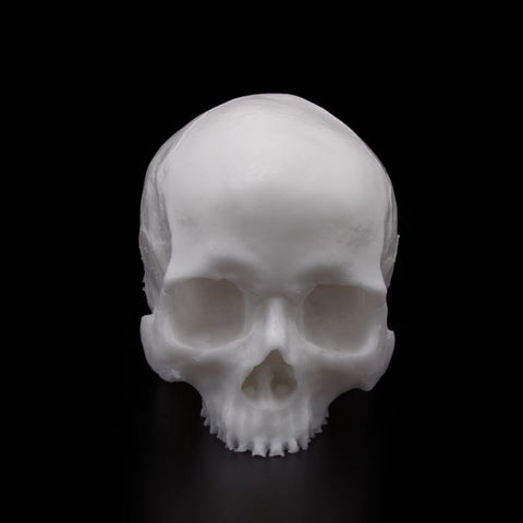 A Pound of Flesh Tattooable Synthetic Yorick Skull