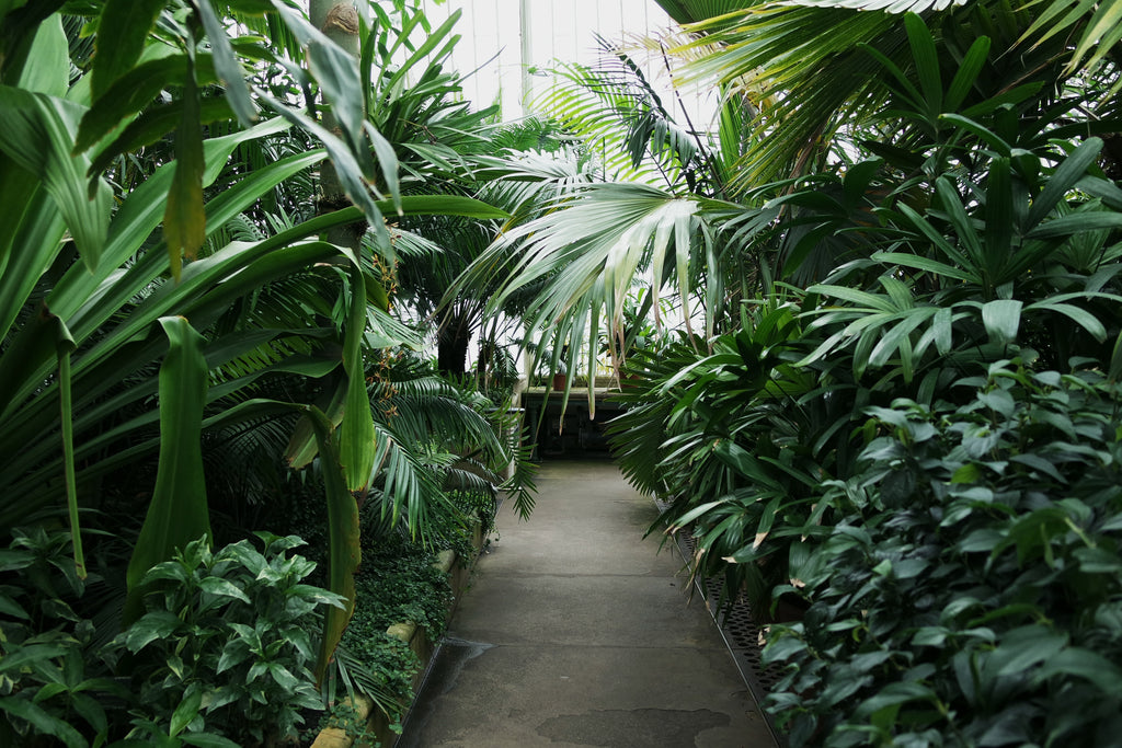 Travel Journal - Kew Gardens