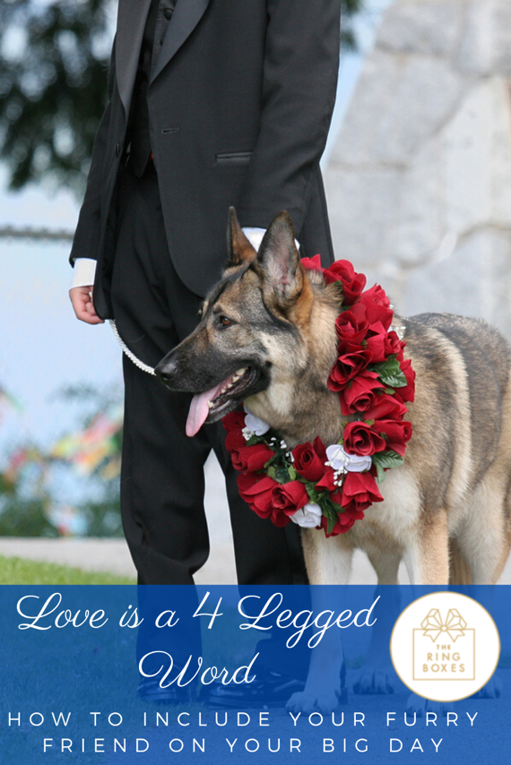 Love is a 4-Legged Word: How to Include Your Furry Friend on Your Big Day!