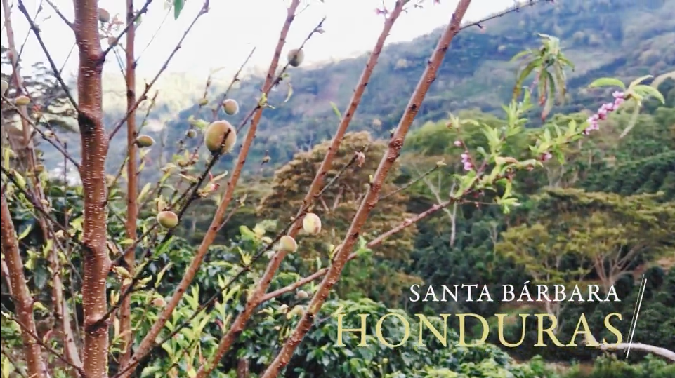 Field Notes: Cameron's highlights from Honduras
