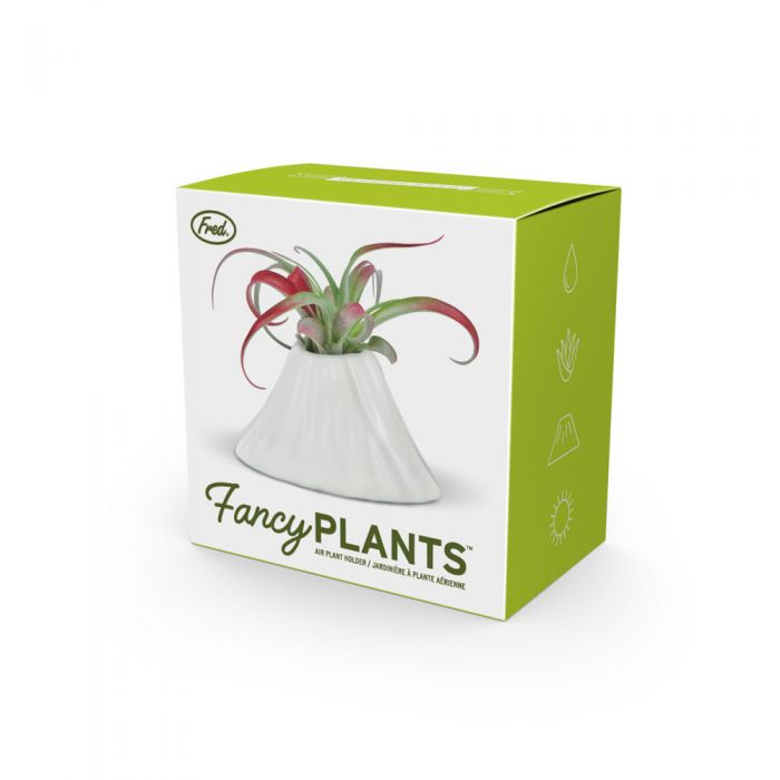 Fancy Plants Air Plant Holder