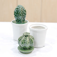 Cactus Cookie Jar - Pharm Favorites by Economy Pharmacy