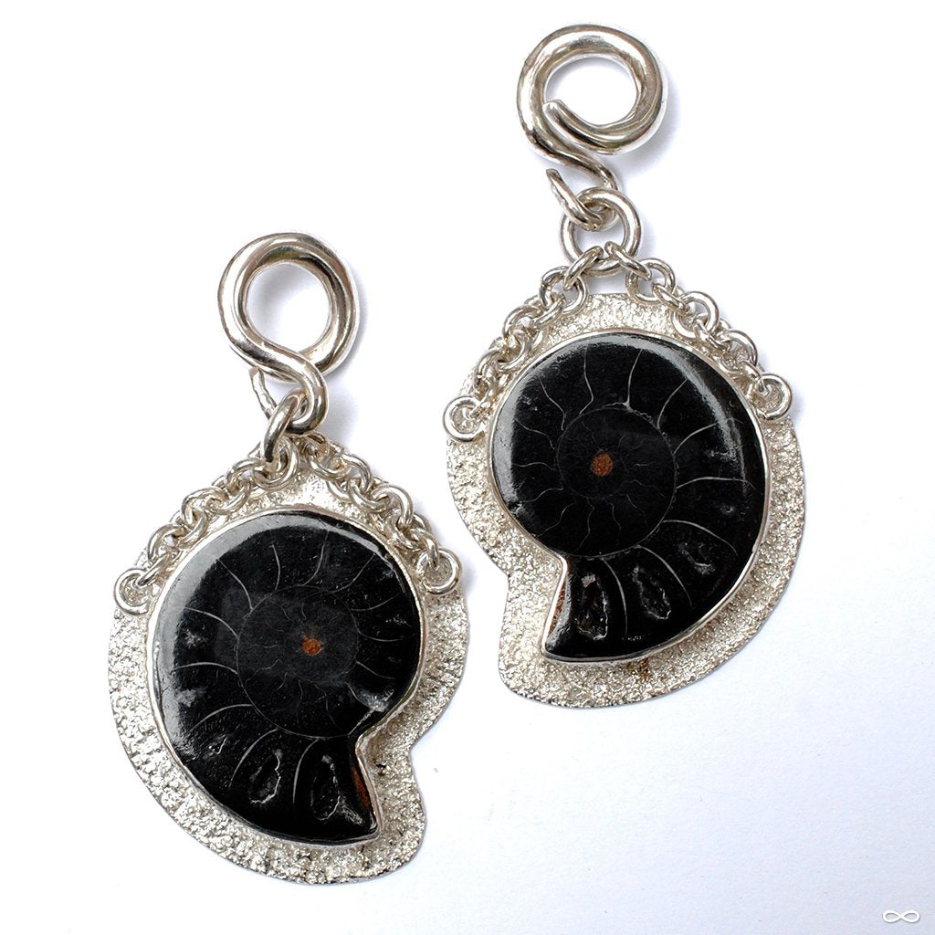 Black Ammonite Weights from Diablo Organics