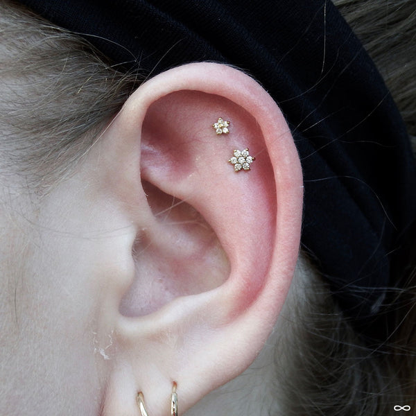 Outer helix piercing (top) with 5 Stone Flower Press-fit End in Gold from LeRoi in Clear CZ