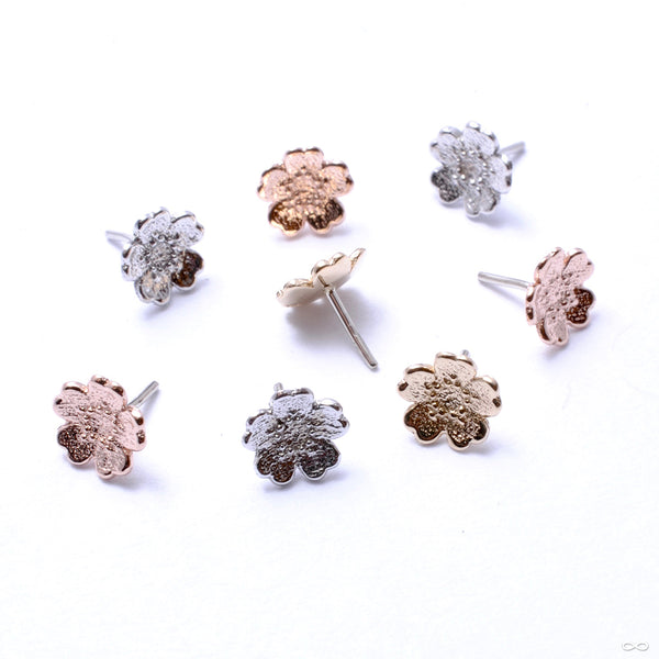 Simple Daisy Press-fit End in Gold from BVLA in assorted materials