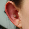 Afghan Press-fit End in Gold from BVLA in a conch piercing