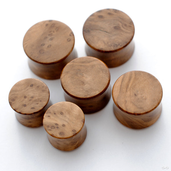 Olivewood Burl Plugs from Bishop Organics