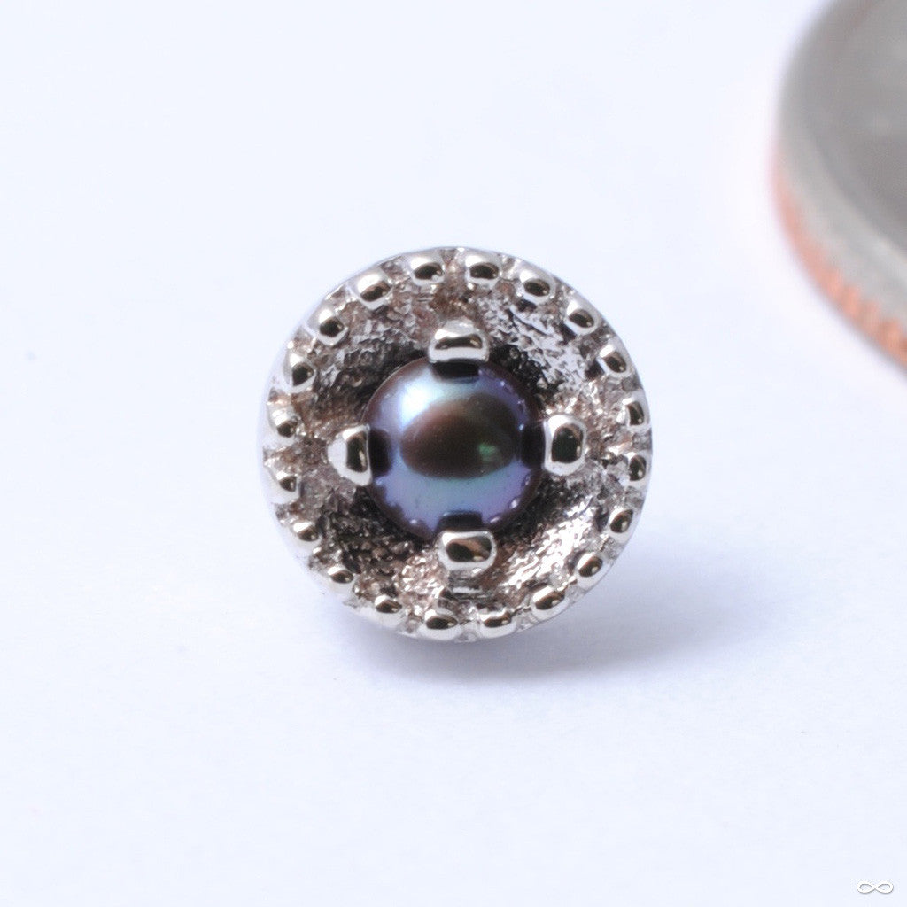 Round Harlequin Press-fit End in Gold from BVLA with Black Pearl