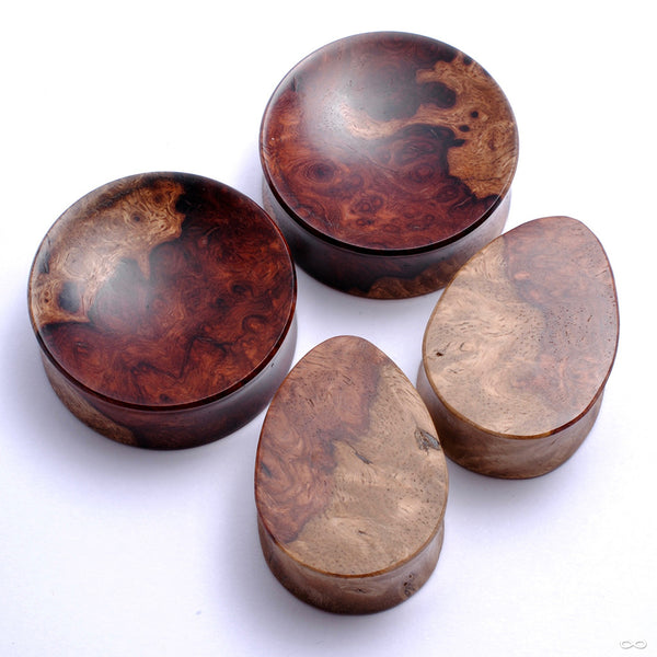 Two-tone Amboyna Plugs & Eyelets from Bishop Organics
