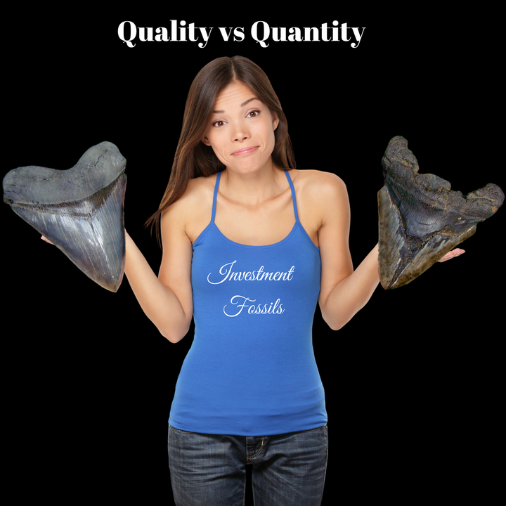 What makes one Megalodon tooth more valuable than another?