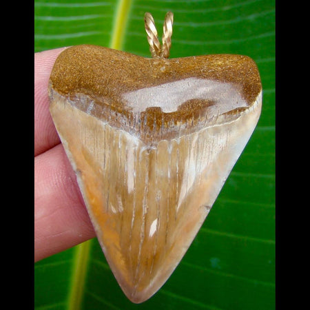 Pendants 2 in. * ORANGE * Juvenile Megalodon shark tooth pendant