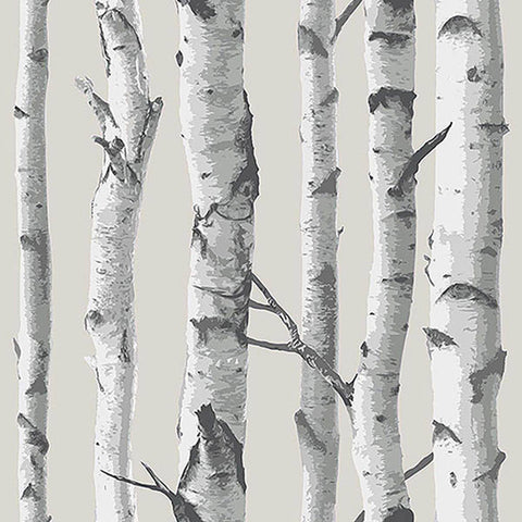 Birch Trees Wallpaper Wall Decal (NB)