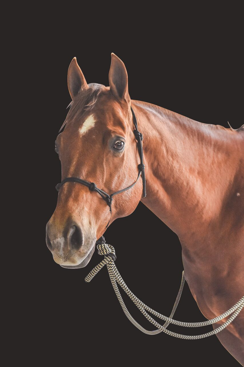Rope Bitless Bridle with Mecate