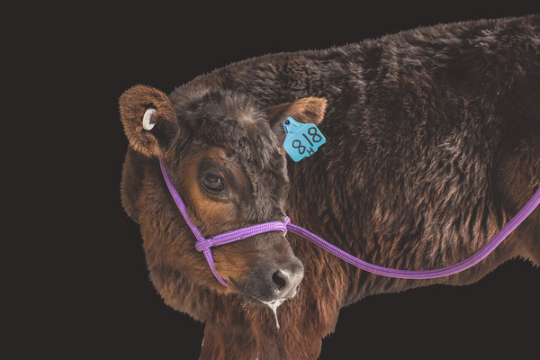 Adjustable Rope Cow Halter