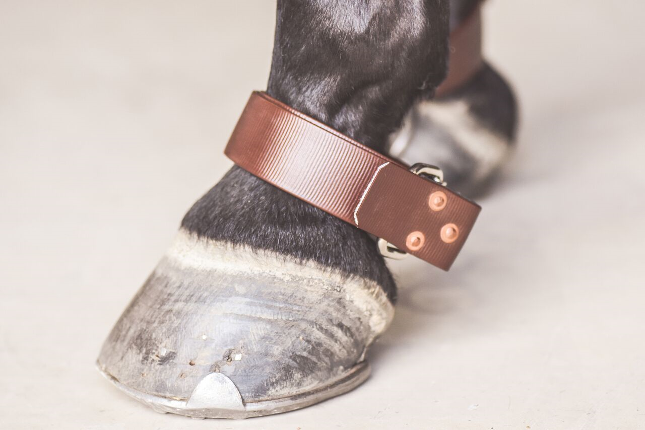 Drovers Saddlery Made Quick release Hobble Straps