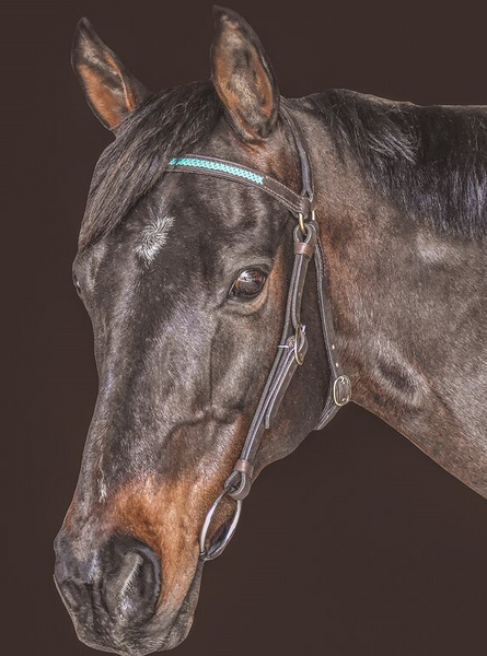 Drovers Saddlery Made Barcoo Bridle with laced Browband