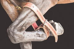Drovers Saddlery Made Front Leg Hobble