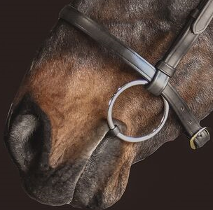 Drovers Saddlery Made Barcoo Noseband