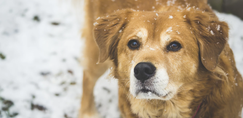 How to Prepare Your Dog for Winter