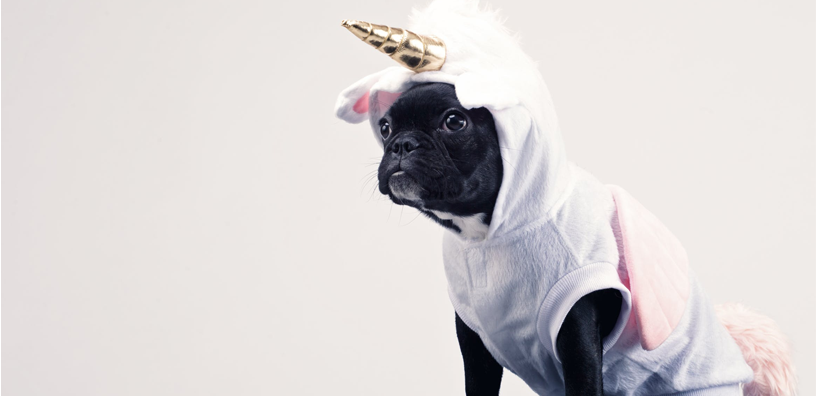 5 Tips for Keeping Your Pup Safe on Halloween