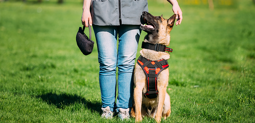 Top 5 Training Tips for New Dogs Owners
