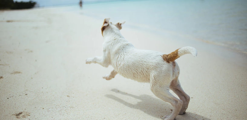 5 Signs Your Dog May Have Joint Pain