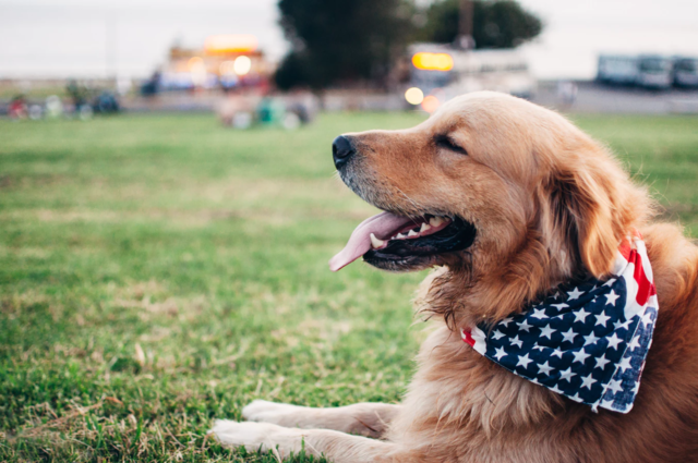Top Tips for Helping Your Pet Through Independence Day