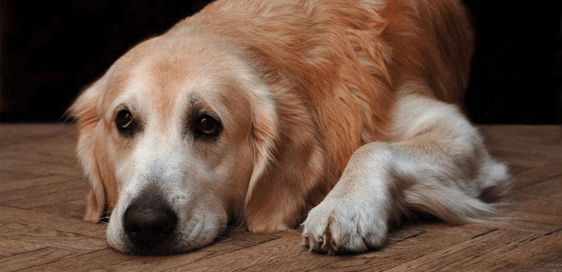 5 Early Warning Signs Of Dog Arthritis (& How To Prevent It)