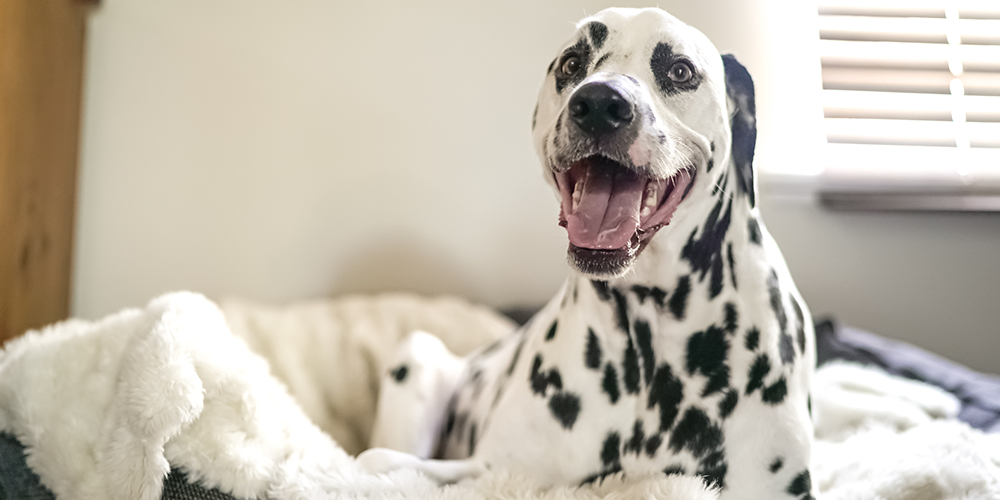 tips for using essential oils around dogs