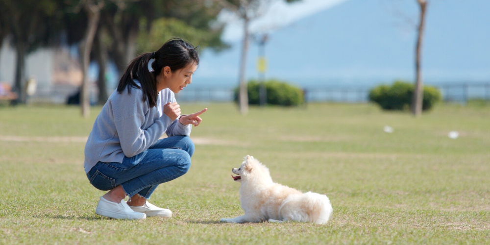 signs of separation anxiety PupGrade