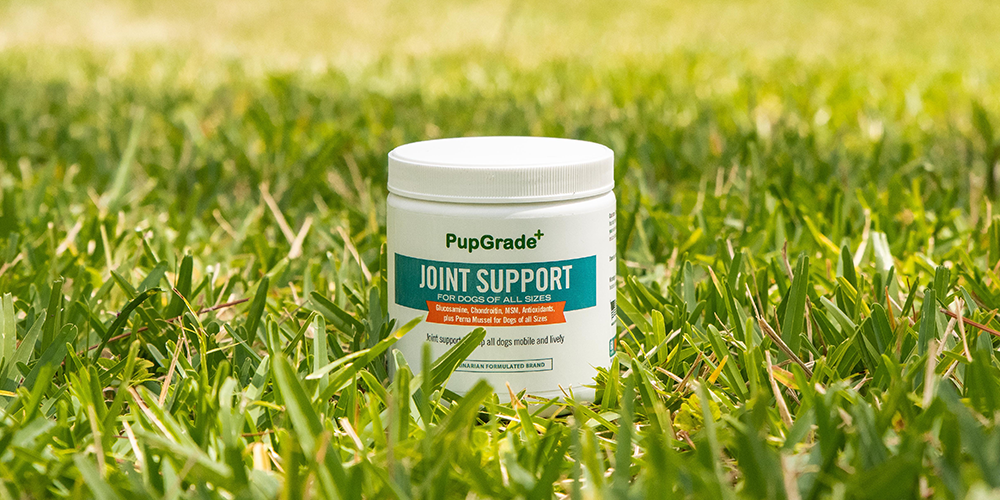 pupgrade joint support chew