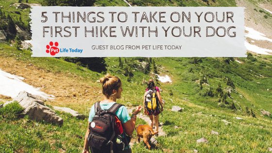 5 Items You Need to Pack on Your First Hike With Your Dog
