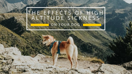 The Effects Of High Altitude On Your Dog