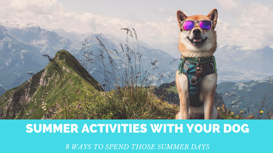 8 Fun and Safe Summer Activities To Do With Your Dog