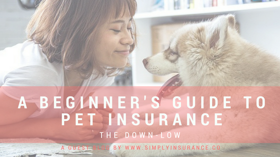 A Beginner's Guide to Pet Insurance